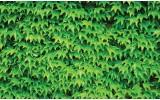 Fotobehang Natuur | Groen | 312x219cm