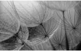 Fotobehang Bloemen | Grijs | 312x219cm