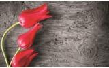 Fotobehang Bloemen, Tulp | Rood | 416x254