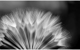 Fotobehang Bloemen | Zwart, Wit | 416x254