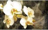 Fotobehang Orchidee, Bloemen | Geel | 104x70,5cm