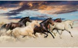 Fotobehang Paarden | Crème, Blauw | 152,5x104cm
