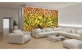 Fotobehang Luipaard | Geel, Groen | 312x219cm