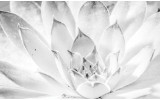 Fotobehang Bloem, Modern | Wit | 416x254