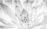 Fotobehang Vlies | Bloem, Modern | Wit | 368x254cm (bxh)
