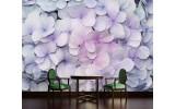 Fotobehang Bloemen | Paars, Roze | 208x146cm