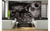 Fotobehang Papier Paard, Design | Zwart | 254x184cm