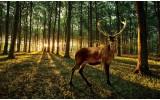 Fotobehang Bos, Hert | Bruin | 152,5x104cm