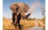 Fotobehang Vlies | Olifant, Natuur | Grijs | 368x254cm (bxh)