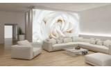 Fotobehang Bloemen, Roos   Wit   152,5x104cm