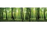 Fotobehang Vlies Bos, Natuur | Groen | GROOT 832x254cm