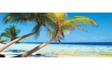 Fotobehang Tropisch | Blauw | 250x104cm
